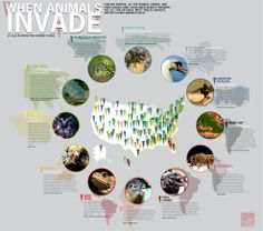 Attack of the invasive species - The Week