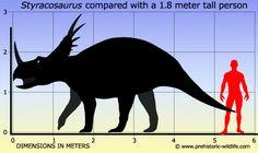 http://www.prehistoric-wildlife.com/species/s/styracosaurus.html