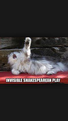 Cat:Noooooooooo!why whyyyyyyyy!!!!!!!!