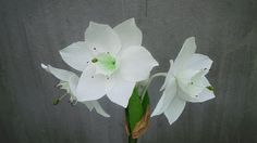 How To Make Amazon Lily Paper Flower From Crepe Paper - Craft Tutorial