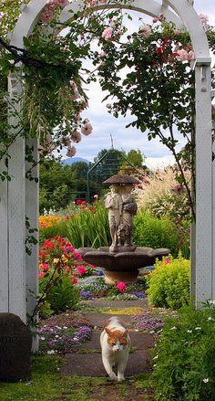 A cat, a gate, and a garden