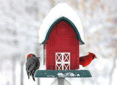 Red winter wonderland