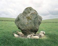 Sheep and Standing Stone, Avebury, England