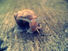 lovely snail