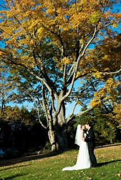 Wedding at Elm Bank in Maple Grove