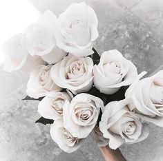 no rain, no flowers ❁ // My Flower, White Flowers, Red Roses, Beautiful Flowers, Beautiful Dresses, White Roses Background, Ivory Roses, Fresh Flowers, Beautiful Images