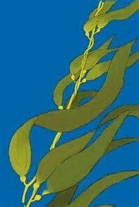 kelp forest drawing에 대한 이미지 결과