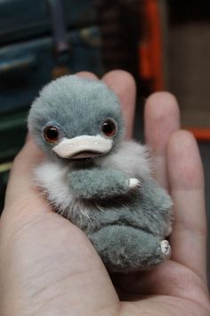 Artist Stuffed Realistic Miniature Animal Niffler in Case. Cute Fantasy Creatures, Magical Creatures, Cute Little Animals, Cute Funny Animals, Baby Animals Pictures, Animals And Pets, Duck Billed Platypus, Baby Platypus, Fluffy Cows