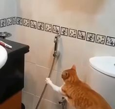 Spray on me humanely - Katzen - Adorable Animals Funny Animal Videos, Funny Animal Pictures, Cute Funny Animals, Cute Cats, Funny Cats, Crazy Cat Lady, Crazy Cats, Animals And Pets, Baby Animals