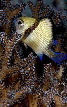 Life Under The Sea, Under The Ocean, Sea And Ocean, Underwater Creatures, Underwater Life, Ocean Creatures, Colorful Fish, Tropical Fish, Pretty Fish
