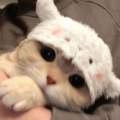Cute Baby Cats, Cute Cats And Kittens, Cute Little Animals, Cute Funny Animals, Kittens Cutest, Cats In Hats, Cute Kitty, Cute Animals Images, Baby Kitty
