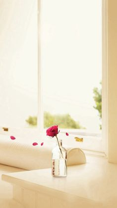 Falling Rose Petals Pure Elegant Indoors #iPhone #6 #plus #wallpaper