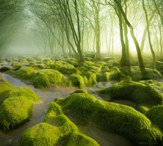 The Moss Swamp by Adrian Borda on 500px