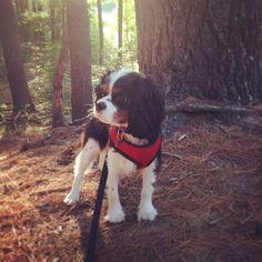 Jax's first hike!