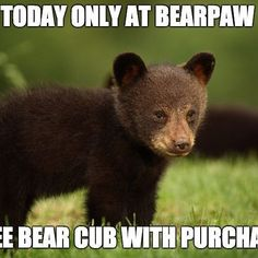 #aprilfools #bearpaw #bearpawstyle #bearpaweurope #bearpawlatam #bearpawmongolia #bearpaw_kr