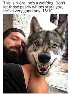This is Njord, he's a wolfdog. Don't let those pearly whites scare you, he's a very good boy. Animals And Pets, Funny Animals, A Dogs Purpose, Funny Images With Quotes, Otters Cute, War Dogs, Lovely Creatures, Super Funny Videos, Crazy Funny Memes
