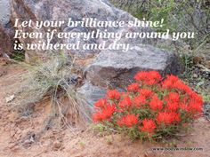 These Desert Paintbrush wildflowers were brilliant as they greeted me on the Devil's Canyon Trail, in the McInnis Natural Preservation Area of Western Colorado. They were the source of this inspirational quote.