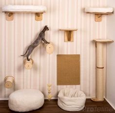 How to Create an Indoor Cat Climbing Wall - KARIO.K - - How to Create an Indoor Cat Climbing Wall Profeline Animal Room, Cat Climbing Wall, Cat Climbing Shelves, Cat Wall Furniture, Furniture Ideas, Cheap Furniture, Cat Wall Shelves, Cat Climber, Cat Gym