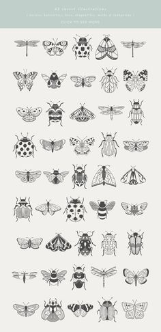Beetles, Bugs & Butterflies is a collection of 45 hand-drawn & vectorised insect illustrations. Each illustration is provided as an outline/line-drawing, with Illustration Papillon, Butterfly Illustration, Plant Illustration, Outline Illustration, Black And White Illustration, Cute Tattoos, Mini Tattoos, Small Tattoos, Tatoos