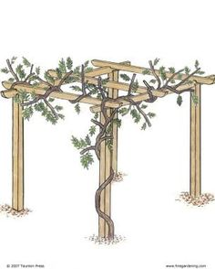 Pruning and Training Wisteria | Fine Gardening