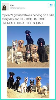 The Dog Squad | Mega Memes LOL!