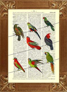 Parrots print Dictionary Art Prints parrot birds by PrintLand, $9.50