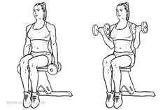 seated dumbbell curls | return to exercise guide seated dumbbell curl primary muscle group ...