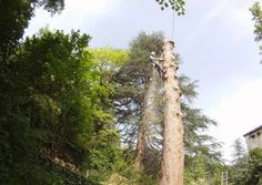 abattage-arbre-ardeche