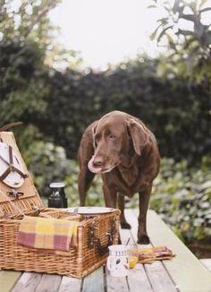 8 Toxic Foods, 11 Safe Foods for Pets: Dog Picnic Pet Dogs, Dog Cat, Toxic Foods, Guinea Pig Toys, Dog Activities, Pet Health, Dog Friends, Dog Treats, Pet Birds