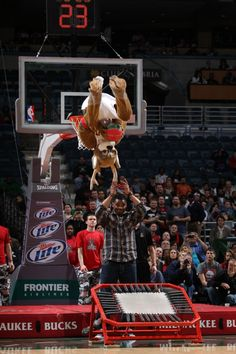 I was here this night....Bango dunks over Desmond Bishop. I'm not a huge bucks fan, but I was pretty impressed with the dunk