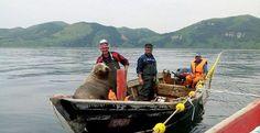 Морской котик заставил рыбаков катать его в лодке / Новости / Моя Планета