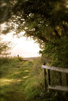 """""""There are far, far better things ahead than any we leave behind.""""  C. S. Lewis  (photo, Susan Rose Lea, 2011)"""