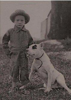 Uplifting So You Want A American Pit Bull Terrier Ideas. Fabulous So You Want A American Pit Bull Terrier Ideas. Dogs And Kids, Animals For Kids, Cute Animals, Animals Dog, Terrier Dogs, Pitbull Terrier, Bull Terriers, Dog Photos, Dog Pictures