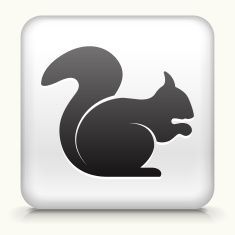 Royalty free vector icon button with Squirrel vector art illustration