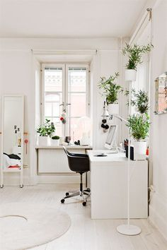 office decor // indoor plants