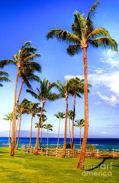 ✮ Kapalua Palms
