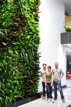 Greenwall Australia was called upon to turn a drab looking office block entrance into a lively space of colour and greenery. Located in Neutral Bay, Sydney, the transformation of the office Planting, Gardening, Greenery, Sydney, Entrance, Om, Neutral, Australia, Urban