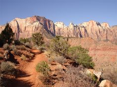 Trails in Zions park