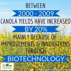Canola yields have increased 20% in 9 years because of improvements in biotechnology.