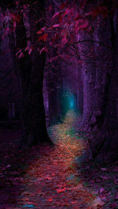 Rainbow pathway
