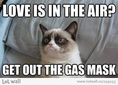 Grumpy Cat Super Bowl: I hope both teams lose! I guess grumpy cat isn't picking a winner in the super bowl this year. The baltimore ravens vs the san francisco Memes Humor, Funny Memes, Hilarious Jokes, Funny Shit, The Funny, Cute Cats, Funny Cats, Funny Animals, Cat Fun