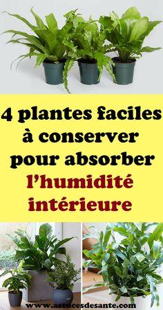 bordures de jardin en palettes bordures palettes1 garden plants et planters. Black Bedroom Furniture Sets. Home Design Ideas