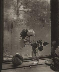 Josef Sudek - La dernière rose - 1956
