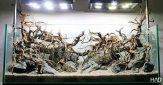 Hardscape by Hamsa Aquarium Design HAD Sometimes one is tempted to fill a tank without plants to avoid hiding such a well set up hardscape Aquarium Landscape, Nature Aquarium, Planted Aquarium, Aquarium Fish, Cichlid Aquarium, Aquascaping, Fish Aquarium Decorations, Aquarium Driftwood, Aquarium Design