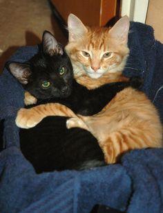 Cat-tastic huggles