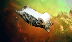 Space cat with toilet paper...