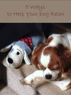 5 Ways to Help Your Dog Relax Dogs can become over stimulated just as adults, and need to relax and unwind. You can help your dog relax in just a few easy steps. By doing so, you can help promote a...