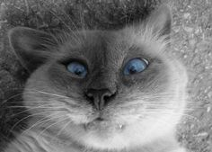 LE lol cat par exelance