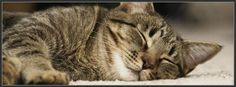 Sleeping Cat Facebook Cover Photo Profile Banner