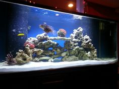 Our 220g salt water fish tank. Two months set up. (3rd tank)